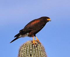 01-07-19-0043845 (Lake Worth) Tags: nature arizona tontonationalforest sonorandesert