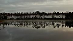 Fog in the Forest (Jan Nagalski) Tags: weather fog gloom dark darksky water lake reflectionsnature silhouettes southwestflorida fortmyers florida jannagalski jannagal foreboding mood moody atmospheric