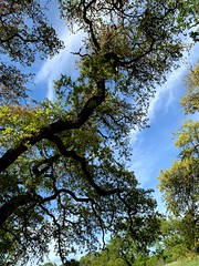 Trees at Zilker Park in Austin (lindsey.davis97) Tags: atx texas austin austintexas zilkerpark clouds sky trees outdoors nature