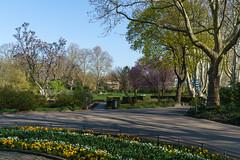 Stadtgarten (KaAuenwasser) Tags: stadtgarten ecke schön rosengarten seebühne weg wege beet bepflanzung baum bäume platanen anlage frühling 2019 karlsruhe magnolie platanenallee