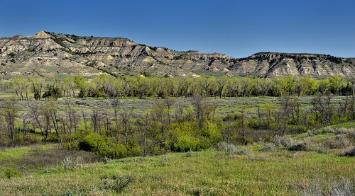 I Walked Under the Cottonwoods in the Merry Month of May (Theodore Roosevelt National Park)