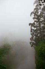 杉林溪森林遊樂區 (紅色小草) Tags: nikonf3hp 2104 fujifilm400 35mmf20