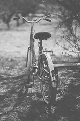 A bicycle (Inka56) Tags: crazytuesday blackandwhite blackwhite bokeh lightandshadows trees grass bench bicycle light