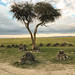 Ol Pejeta Rhino Cemetery & Memorial, Remembering Sudan (the last male northern white rhino) One Year On