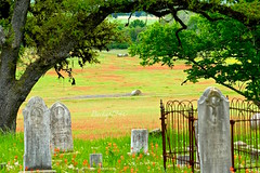 Round Top Texas. (backup1940) Tags: backup1940 roundtoptexas flowers bluebonnets paintbrush balehay cemetery