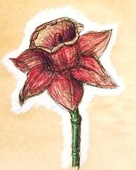 Narcisse (cecile_halbert) Tags: fleur flower botanical botanique dessin drawing crayondecouleur coloredpencil polychromos tonedpaper narcisse naturemorte stilllife