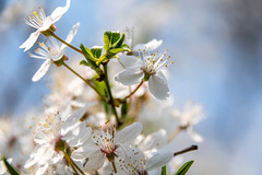 Springtime (Maria Eklind) Tags: dof bokeh macro malmö nature flower slottsparken closeup outdoor blommor garden sweden depthoffield skånelän sverige se