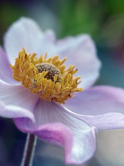 (Kaska Ppp) Tags: nature flower naturephotography plant naturaleza pink macro blossom