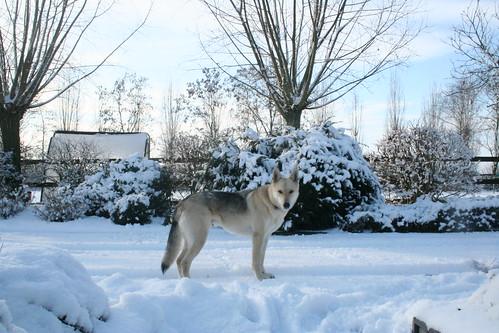 Raico in de sneeuw
