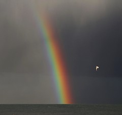 Flying over the rainbow (johnlauper) Tags: rainbow weather clouds storm rain gull flying bird