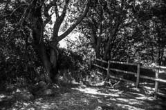 Somewhere (Jose Rahona) Tags: campo nature valla land fence arboles tress blamcoynegro blackandwhite bw monochrome fencefriday hff