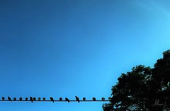 MINIMAL BIRDS (giovanni.muscara28) Tags: fotografia photography landscape sky natura nature skye art arte cool good beautiful minimale minimal blu blue look color skyscape giovannimuscarà birds morning tree