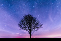 Pink and blue (Andy barclay) Tags: tree trees field country side landscape nature land horizon astro astrology astrophotography stars star space galaxy milkyway night cold nighttime winter dark sky nikon d7100 sigma 1020mm wide long