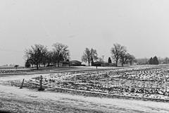 Houses on Boyer (joeldinda) Tags: grey gray tree graysky sky cloud greysky fields house 4402 january unpaved stubble road dirtroad winter powershotg9xii g9x canon 2019 roxandtownship roxana michigan eatoncounty
