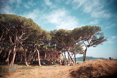 (Benedetta Falugi) Tags: film filmisnotdead filmphotography fujisuperia400 film35mm filmcamera fi filmgrain filmisgod analogphotography analog analogue asummer air pines pineta trees tuscany thefilmcommunity theanalogueproject believeinfilm benedetafalugi beach blue shootingfilm sea summer sky sheshootsfilm view tinyhumans tiny istillshootfilm ishootfilm house bythesea green branches 22mm eximus wwwbenedettafalugicom water womeninphotography womeninstreet