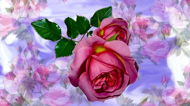 Обои Grafika, Kwiat, Róza картинки на рабочий стол, раздел цветы - скачать
