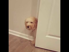 I've been playing hide and go seek all night - Cute Dog (tipiboogor1984) Tags: aww cute cat funny dog youtube