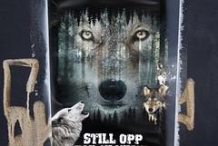 Still opp for ulvane! (dese) Tags: easternnorway ulv ulvane wolf wolves lobo lobos loup oslo ulvar ulven february15 2019 february winter vinter stillopp europa scandinavia noreg norway austlandet europe varg susi