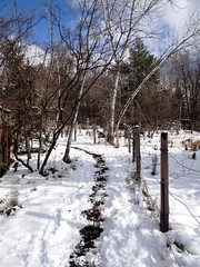 Snowy path (EcoSnake) Tags: snow path february winter sunshine idahofishandgame nature center