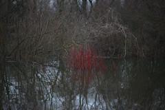 early spring (Mindaugas Buivydas) Tags: lietuva lithuania color winter february red tide kėdainiai nevėžis sadnature shallowdepthoffield mindaugasbuivydas earlyspring