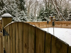 another round of winter today (karma (Karen)) Tags: baltimore maryland home backyard fences feeders trees snow winter hff
