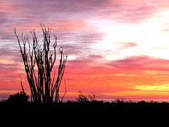 Morning colors (thomasgorman1) Tags: dawn sunrise desert ocotillo canon early red clouds baja mexico