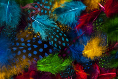 Multicolored Feathers (Jim Corwin's PhotoStream) Tags: mulitcolored abstract abstractbackgrounds abstractcolors abundance animalthemes artconcept background backgrounds bluelights chaos circles closeup coloredlights concept creativity decoration desighelement design fantasy feather featherabstract feathers groupofobjects highangleview hole holes horizontal inarow light lightcircles metal metalgrate metallic mixedcolors mixing multicoloredfeathers nobody overheadimage pattern patterns photography reflections reflective row rows selectivefocus simplicity softness steel surreal technology texture textured vibrantcolors