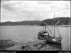 'Bellinger III' (1902 - 1912) - loading sleepers at Quarantine Bay (Eden) (Great Lakes Manning River Shipping NSW) Tags: johnwrightshipyards alecmackay micktreiberg missnelliejeffs misskennedy misscooper nambuccariverbar captainjohnrosten michaeltreiberg captainjameshunt captaintanglin nicholsonfamilycollection coastaltrader midnorthcoast australia tuncurry greatlakesnsw nswgreatlakes capehawkeharbour bellingerjwbst michaeltreibergcollection micknugent johnwrightsyt greatlakeshistory historicalgreatlakes bellinger wrightshipst painting allentaylorco nsw