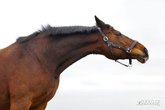 Rana 1 (quickclickmemories) Tags: horse paard horses art paarden fine 18200mm bay mare kwpn curious animal mammal