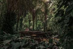 Parque Lage - Rio de Janeiro (livejackson) Tags: brazil parque lage rio de janeiro