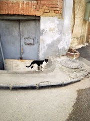 Cat (Anna Gelashvili) Tags: road дорога cat кошка კატა ფისო animal животное кот