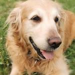 After 2 years I finally see my dog 😍😍 Nika ❤️❤️❤️ thumbnail