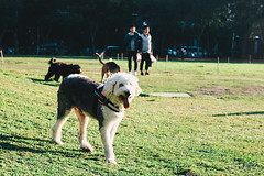 _MG_0401 (waychen_c) Tags: taiwan taichung taichungcity westdistrict peoplessquare dog 台灣 台中 台中市 西區 市民廣場 狗 犬 イヌ