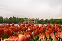 El-Goli-Tabriz(IRAN) (hamid-golpesar) Tags: elgoli shahgoli elgölü tulip tulipflower tulipflowers red redflowers sky building landscape nature lake flower flowers tree owaysee outdoor tabriz travel iran hamid hamidowaysee hamidgolpesar