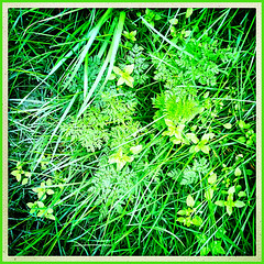 50 Shades of Green (Julie (thanks for 8 million views)) Tags: 100xthe2019edition 100x2019 image17100 grass green foliage hipstamaticapp squareformat iphonese hggt