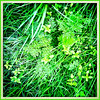 50 Shades of Green (JulieK (thanks for 8 million views)) Tags: 100xthe2019edition 100x2019 image17100 grass green foliage hipstamaticapp squareformat iphonese hggt