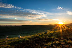 Amanecer en Vidal. Sunrise at Vidal. (enrique.torrens) Tags: amanecer sunrise campo landscape paisaje cows vacas febrero february invierno winter naturaleza nature nikon sigma 1020 valencia de alcántara cáceres spain