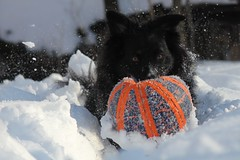 Snow Soccer (Living life off leash) Tags: