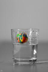49/365 (misa_metz) Tags: nikon tokina photo photography water ball glass indoor macro toy colors color
