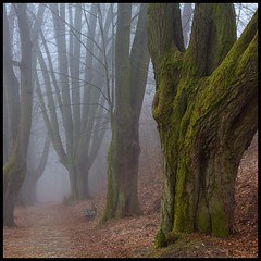 long-term memory (luci_smid) Tags: trees path branches green color impression