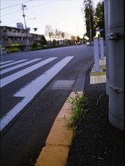 交差点 (frenchvalve) Tags: 交差点 栄町交番前 エノコログサ 中判 film filmphotography 120 120rollfilm 645 mediumformat