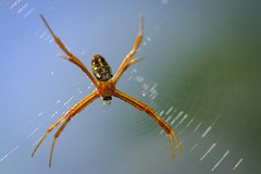 DSCF2804 (Patrick Mouret) Tags: fujixe3 fujinonxf80mmf28rlmoiswrmacro insectes insects araignées spiders