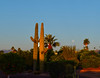 Stereotypical Arizona Cactus Moon Setting w/ Cactus (oybay©) Tags: arizona sunset monsoon cloudy clouds saguaro cactus silhouette color colors nature natural orange yellow red purple outdoor sky dusk cloud city tree grass moon