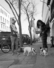 Getting to Know You (Tim Roper) Tags: 28mm elmarit leica dilutionb dogs film hc110 hp5 iso800 palo alto silicon valley blackandwhite ilford street