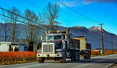 Peterbilt - Tandem Truckin' (Christie : Colour & Light Collection) Tags: dumptruck truck workvehicle truckin trucking tandem peterbuilt street road working tandemdumptruck bccoastalmountains britishcolumbia canada blueberrybushes farmland telephonepoles telephonewires mountain outdoors sky farm country trucker dieseltruck diesel countryroad nikon nikkor peterbilt
