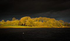 Angry (Matthew Johnson1) Tags: perfect bank bird water forest trees rain light sliver angry sky drama dramatic