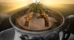 girafternoon tea (Malcolm Hare Photography and Tuition) Tags: fantasy art photoshop giraffe light