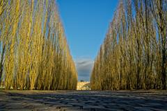 Allée du Petit Trianon (Chrisar) Tags: trianon allée arbres ombres nikond750 dxophotolab angénieux3570