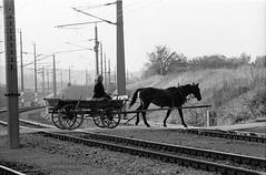 Beware of train (Drehscheibe) Tags: horses horsecart rails nikonf2 nikkor105mm 35mm film fp4 explore analogica analog blackwhite classicblackwhite