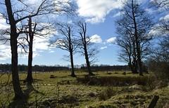 Fields and Woods, Ayrshire, Scotland. (Phineas Redux) Tags: fieldsandwoods ayrshirescotland scottishlandscapes scottishscenery scotland
